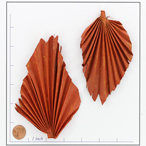 BOTPALM SPEAR ORANGE